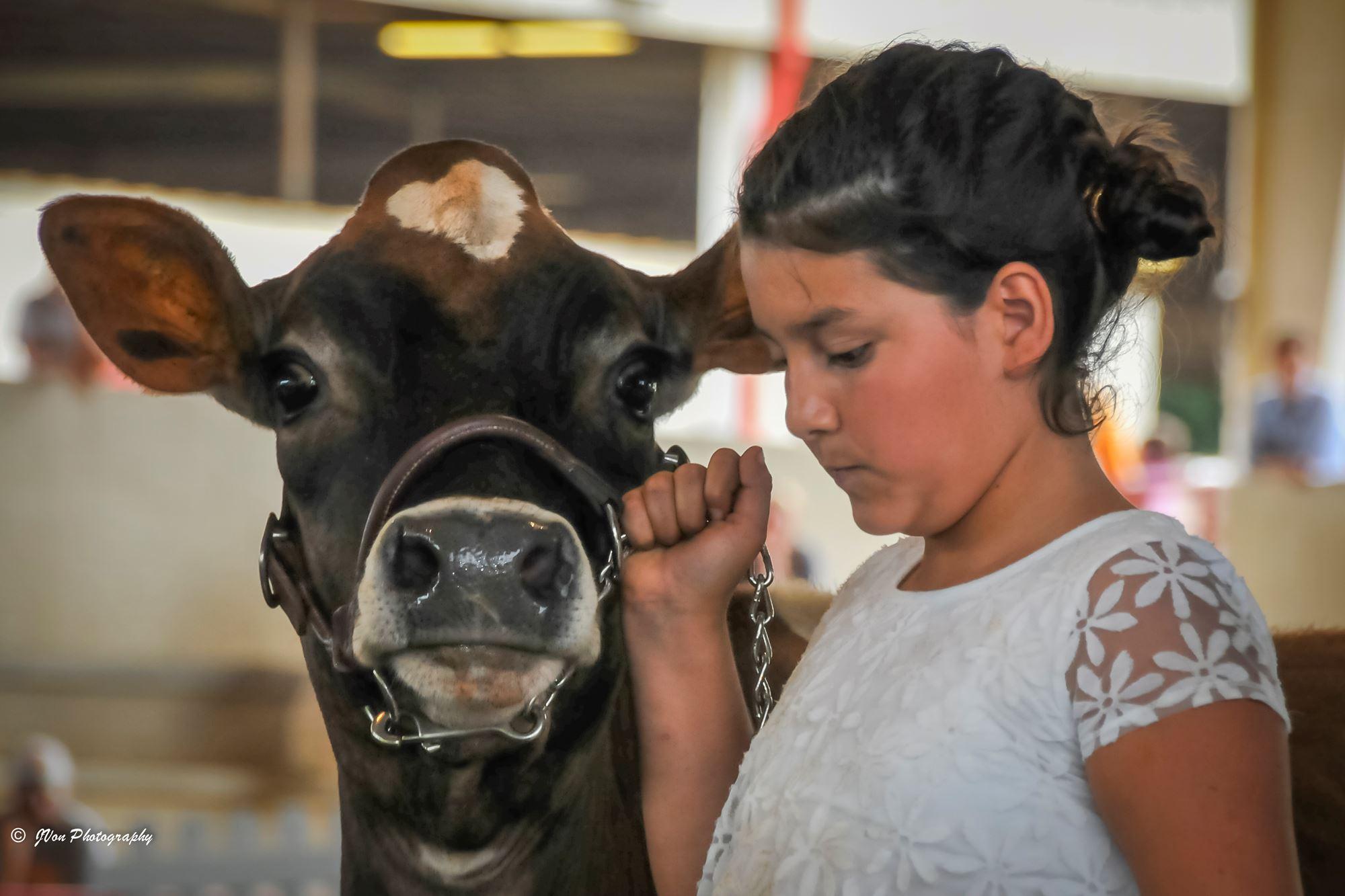 Junior Beef Cattle