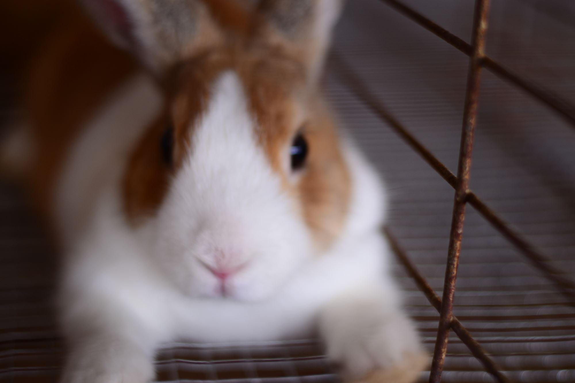 Open Rabbit