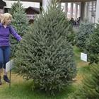 Christmas Tree Exhibit