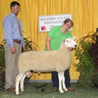 Champion White Border Leicester Ram  and Best Head Ram