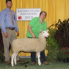 Junior Champion White Border Leicester Ewe