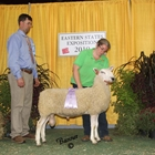 Reserve Junior Champion White Border Leicester Ram