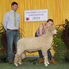 Junior Show Reserve Champion Cotswold Ram