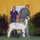 Reserve Junior Champion Katahdin Ewe