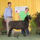 Champion Natural Colored Border Leicester Ewe