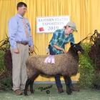 Junior Show Reserve Champion Ewe Natural Colored Border Leicester Ewe