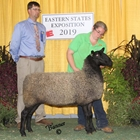 Reserve Champion Natural Colored Border Leicester Ewe