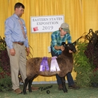 Junior Show Champion Natural Colored Border Leicester Ewe