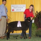 Reserve Senior Champion Natural Colored  Border Leicester Ram