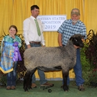 Champion Natural Colored Lincoln Ewe
