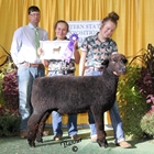 Champion Natural Colored Romney Ewe