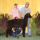 Champion Natural Colored Ewe &Best Fleece Natural Colored