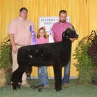 Reserve Champion Natural Colored Ram