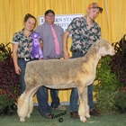 Junior Show Champion Rambouillet Ewe
