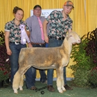 Junior Show Reserve Champion Ewe