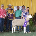 Supreme Champion Ewe Week Two