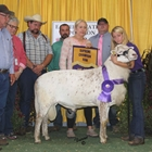 Supreme Champion Ram Week Two