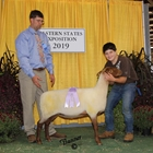 Reserve Champion Junior Show Tunis Ewe