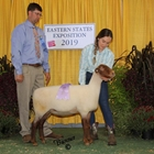 Reserve Junior Champion Tunis Ewe