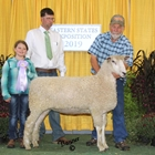 Reserve Champion White Lincoln Ewe