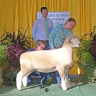 Reserve Champion White Romney Ewe and Best Fleece Romney