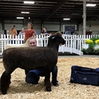 Intermediate Showmanship Winner