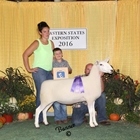 Champion AOB Meat Ewe