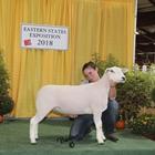 Champion AOB Meat Ewe