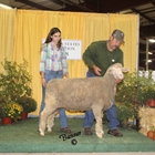 Champion AOB Wool Ewe and Best Fleece AOB Wool