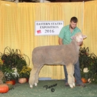 Reserve Champion AOB Wool Ewe and Best Fleece AOB Wool