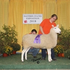 Champion White Border Leicester Ewe
