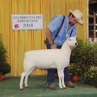 Reserve Champion Cheviot Ewe and Best Headed Ewe