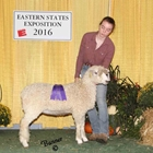 Junior Show Champion Cotswold Ewe