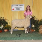 Junior Show Reserve Champion Cotswold Ewe