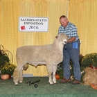 Champion Cotswold Ram and Best Fleece Cotswold