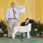 Reserve Junior Champion Dorper Ewe