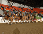 Draft Horse Show