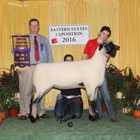 Supreme Hampshire and Champion Ewe