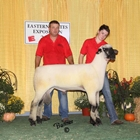 Junior Show Champion Hampshire Ram