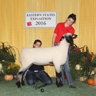 Junior Show Reserve Champion Hampshire Ewe