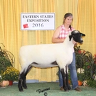 Reserve Champion Hampshire Ewe