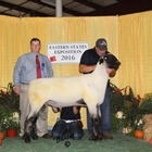 Reserve Champion Hampshire Ram