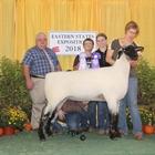 Reserve Champion Hampshire Ewe