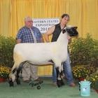 Supreme Hampshire and Champion Ewe