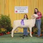 Junior Show Champion Horned Dorset Ram
