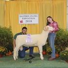 Junior Show Reserve Champion Horned Dorset Ram