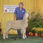 Champion White Lincoln Ewe