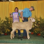 Junior Show Champion White Ram
