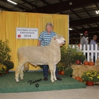 Reserve Champion White Lincoln Ram