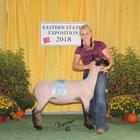 Commended Market Lamb Live
